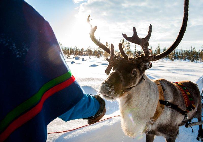 Un Sami avec son renne