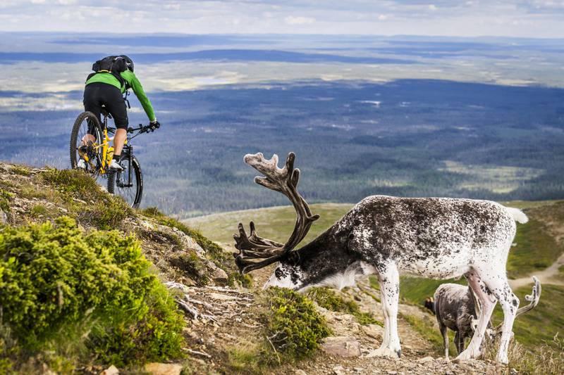 Biking in Idre Fjäll, Dalarna