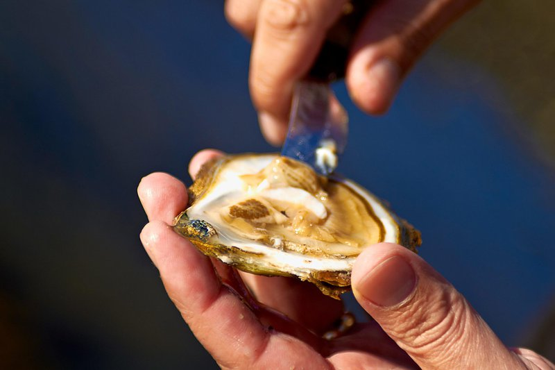 Opening oyster with a knife, West Sweden