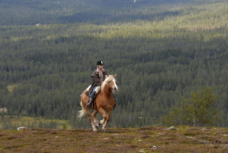 Horse riding, Idre Fjäll
