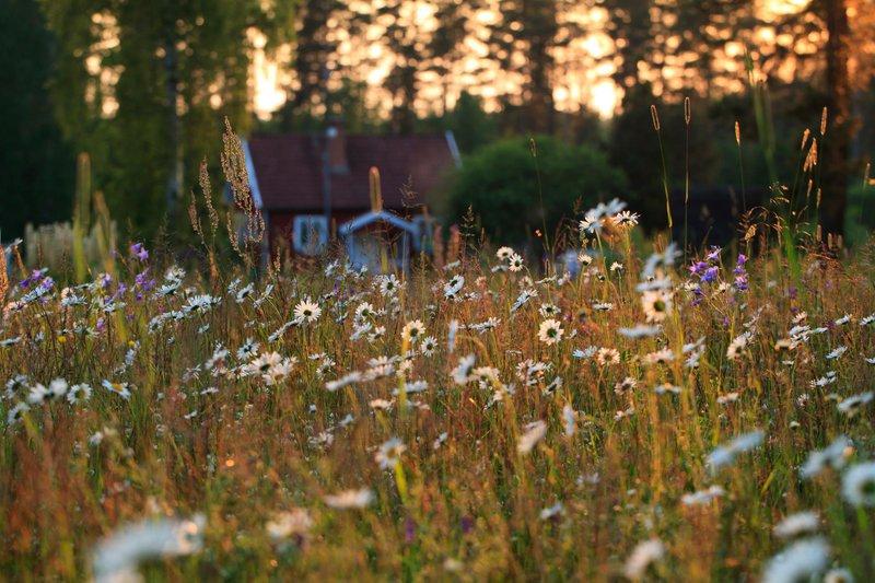 Sommerwiese mit Sommerhau